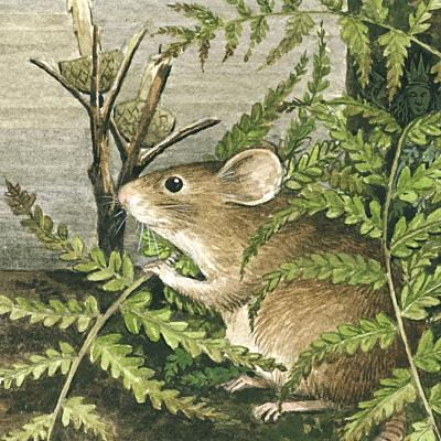 Mousefield A Midsummer Mouse
